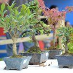 expo-prado-2016-dia-5-51