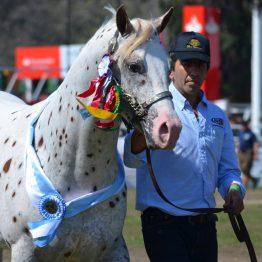 Expo Prado 2017 - Día 11 (108)
