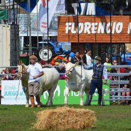 Expo Prado 2017 - Día 11 (19)