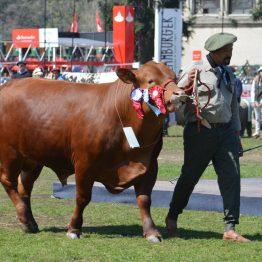 Expo Prado 2017 - Día 11 (77)