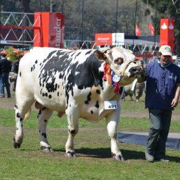 Expo Prado 2017 - Día 11 (84)