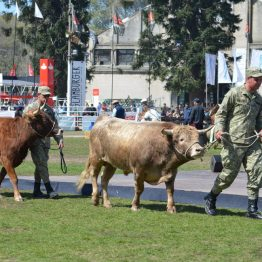 Expo Prado 2017 - Día 11 (86)