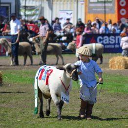 Expo Prado 2017 - Día 11 (96)