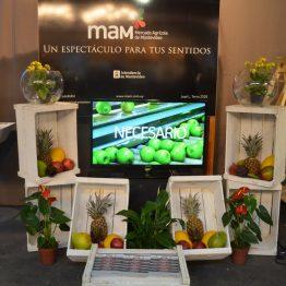 Expo Prado - Día 7 (52)