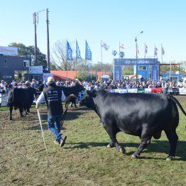 Fotos Expo Prado 2017 - Día 9 (20)