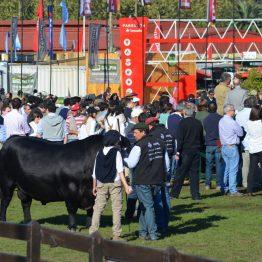 Fotos Expo Prado 2017 - Día 9 (27)