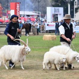 Fotos Expo Prado 2018 - Día 11 (105)