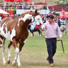 Fotos Expo Prado 2018 - Día 11 (115)