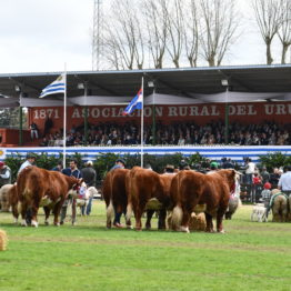 Fotos Expo Prado 2018 - Día 11 (29)