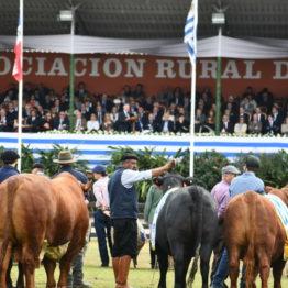 Fotos Expo Prado 2018 - Día 11 (32)