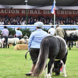 Fotos Expo Prado 2018 - Día 11 (35)