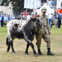Fotos Expo Prado 2018 - Día 11 (63)