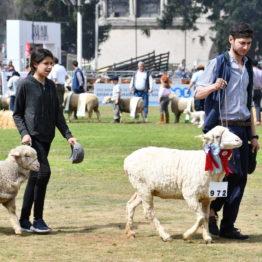 Fotos Expo Prado 2018 - Día 11 (79)