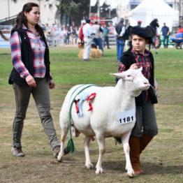 Fotos Expo Prado 2018 - Día 11 (99)