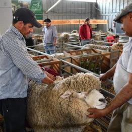 Fotos Expo Prado 2018 - Día 2 (6)
