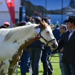 Fotos Expo Prado 2018 - Día 3 (44)