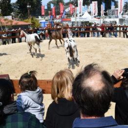 Fotos Expo Prado 2018 - Día 5 (68)