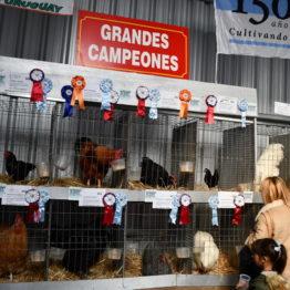 Fotos Expo Prado 2018 - Día 6 (72)