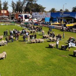 Fotos Expo Prado 2018 - Día 7 (6)