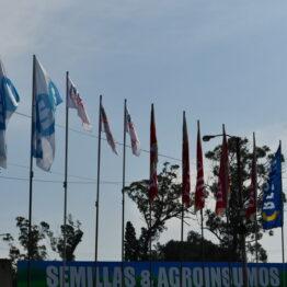 Expo-Prado-2019-Día-10-156