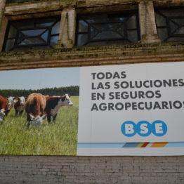 Expo Prado 2019 - Día 10 (225)
