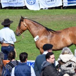 Expo-Prado-2019-Día-10-244