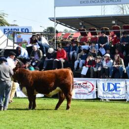 Expo-Prado-2019-Día-10-68