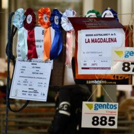 Expo-Prado-2019-Día-10-81