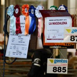 Expo Prado 2019 - Día 10 (81)
