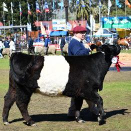 Expo Prado 2019 - Día 11 (108)