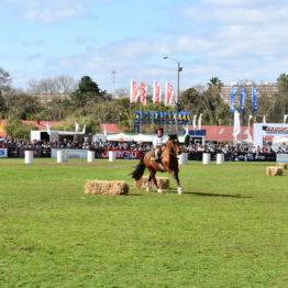 Expo Prado 2019 - Día 11 (178)