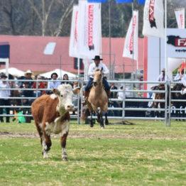 Expo Prado 2019 - Día 12 (171)