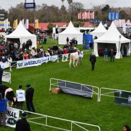 Expo Prado 2019 - Día 3 (157)