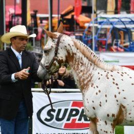 Expo Prado 2019 - Día 4 (120)