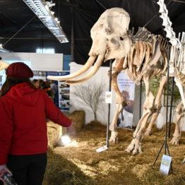 Expo Prado 2019 - Día 4 (77)