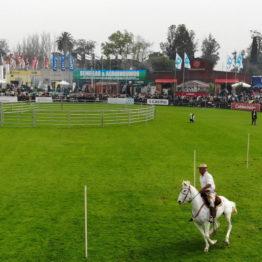 Expo Prado 2019 - Día 4 (8)