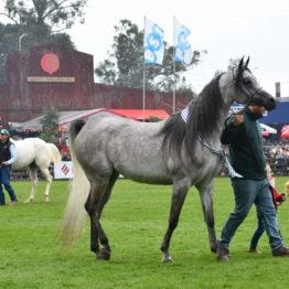 Expo Prado 2019 - Día 5 (125)