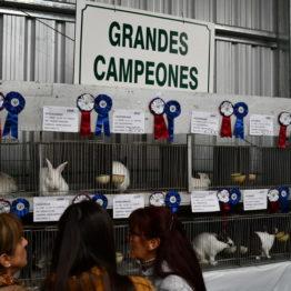 Expo Prado 2019 - Día 5 (40)