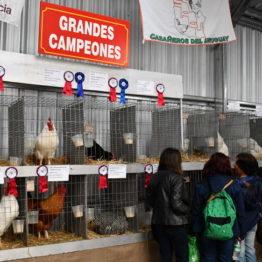 Expo Prado 2019 - Día 5 (41)