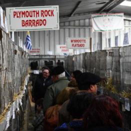 Expo Prado 2019 - Día 5 (42)
