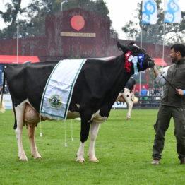 Expo Prado 2019 - Día 5 (88)