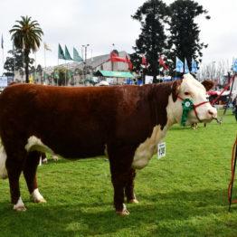 Expo Prado 2019 - Día 7 (124)