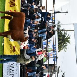Expo Prado 2019 - Día 7 (13)