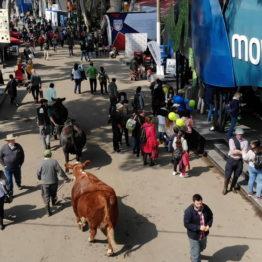 Expo Prado 2019 - Día 8 (123)