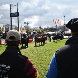 Expo Prado 2019 - Día 9 (8)