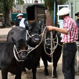 Expo Prado 2020 - Dia 1 (19)