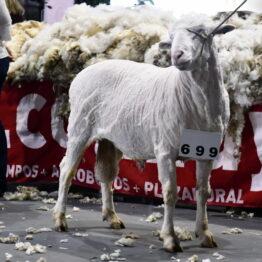 Expo Prado 2020 - Dia 10 (106)