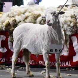 Expo Prado 2020 - Dia 10 (107)