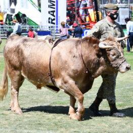 Expo Prado 2020 - Dia 11 (104)