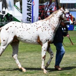 Expo Prado 2020 - Dia 11 (145)